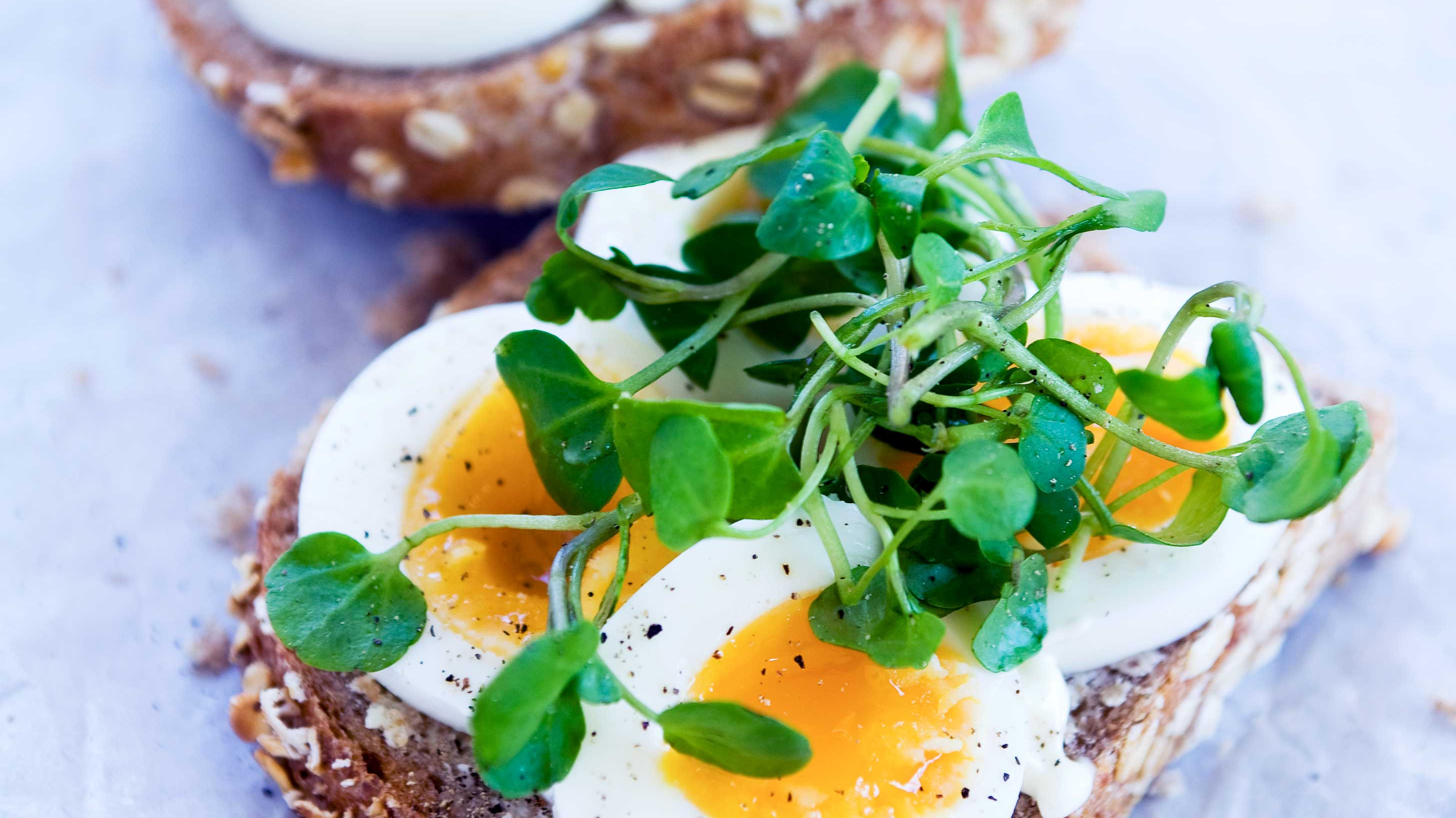 Egg & Watercress Sandwich